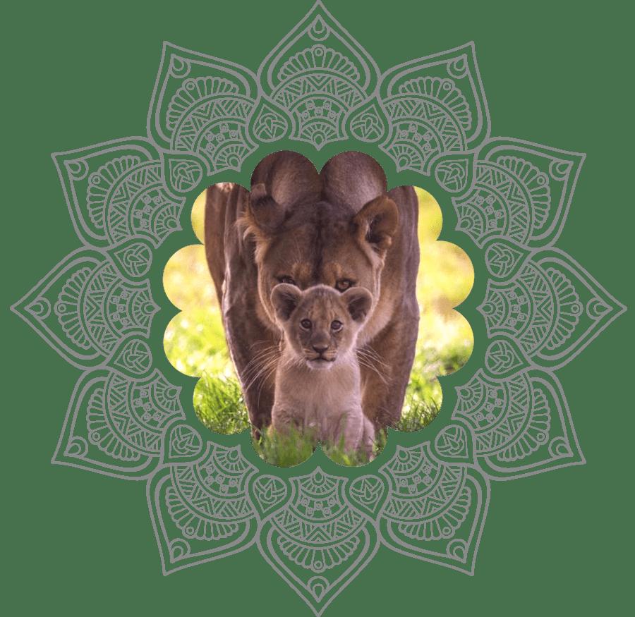 Lionceau et sa mère